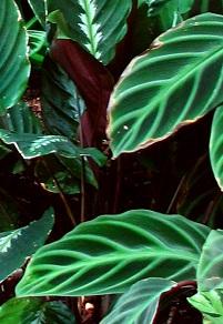 12 piante sicure per i gatti